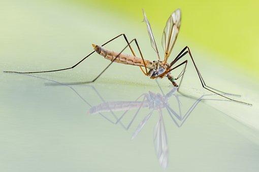 effets piqures moustique tigre